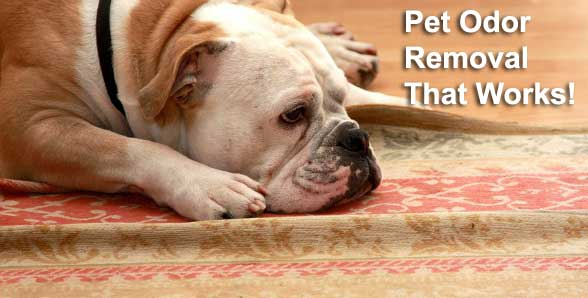 Pet odor removal that works!